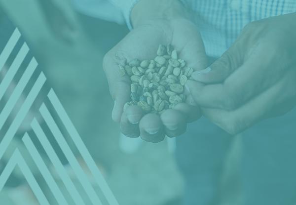 CULTURES DE SPÉCIALITÉ - Améliorer la quantité, la qualité, la fiabilité et la compétitivité du cacao et du café congolais (RDC).