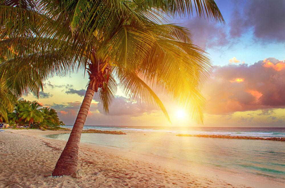 Pig Island - The Bahamas