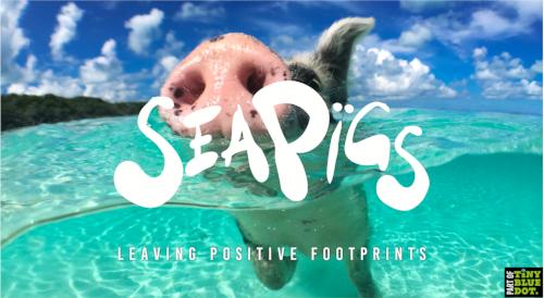 SeaPigs on Pig Island
