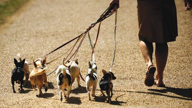 dogs going for walk.jpg