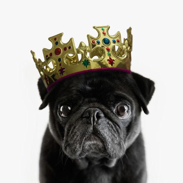 dog wearing cronw 2.jpg