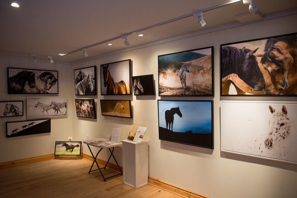 My wild horse images exhibit at Galerie Old Chelsea