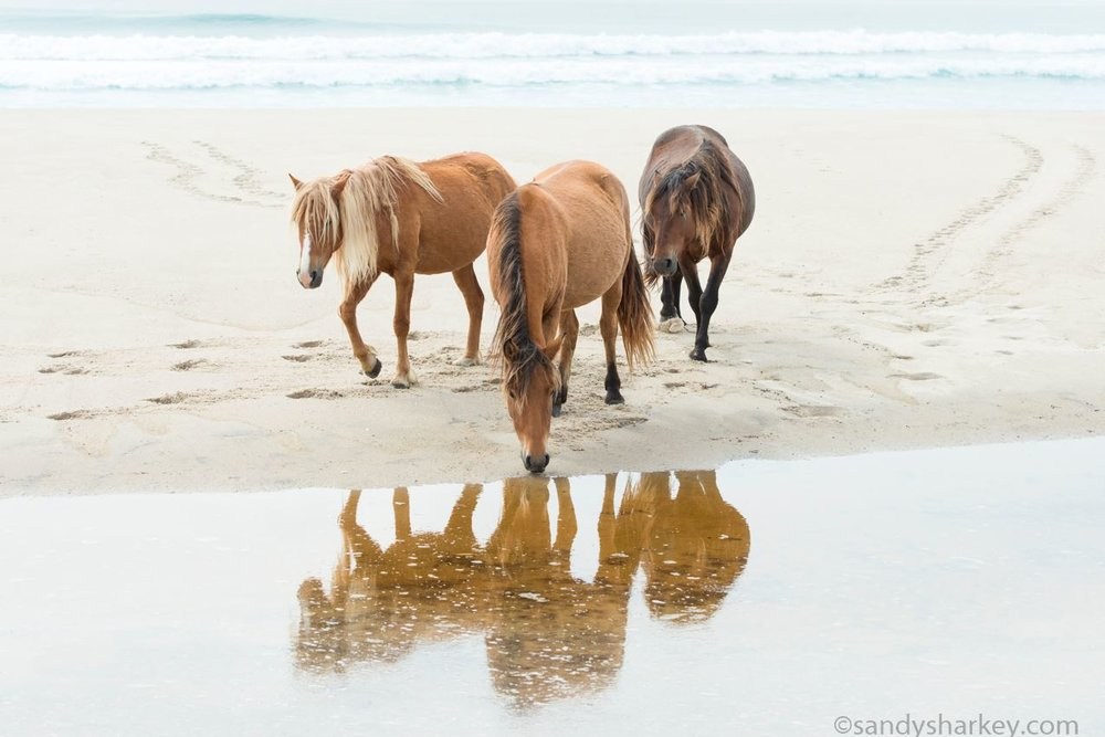 Reflections on Sable Island