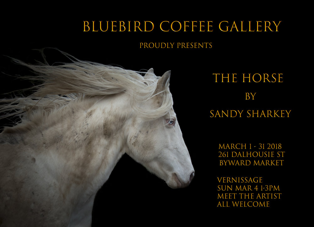Bluebird Coffee Poster 2.jpg