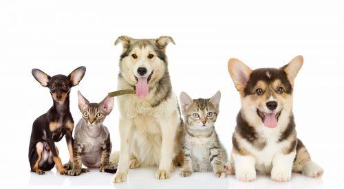 animal_group1-e1498190410391.jpg