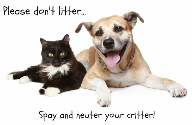 spay-and-neuter-your-pets.jpg