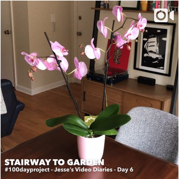DAY 6STAIRWAY TO GARDEN -