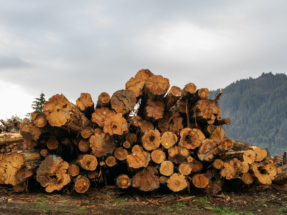 LOG PROCUREMENT - As the world's largest buyer of Western Red Cedar logs, Alta sources timber from managed forests across North America. Our team of log buyers purchases daily from a variety of sources, from small family tree farms to industrial-scale timberlands.360-219-1793 logs@altafp.com