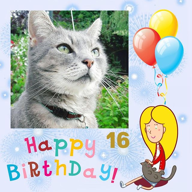 Happy birthday to our hero The real Figgs. He's 16 today and looking as young as ever. Join me in wishing him a very happy birthday with lots of love, fun and treats to come. 🎉✨🎂🎁🎈💜 . . . . #cats #birthdayboy #pets #petsofinstagram #Instagram #pintrest #cutecats #greycat #cutecat #adventuretime #animals #tigers #love #lovecats #kitten #happy #adorable #photo #photooftheday #grey #tumblr #hollieandfiggs #inspiration #instacat #catsofig