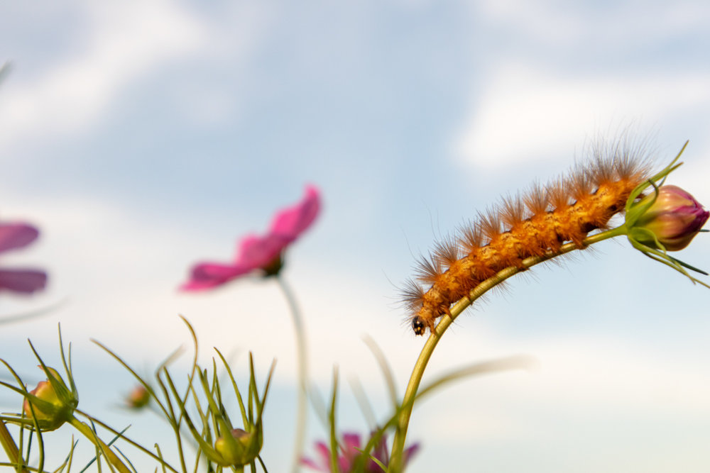 Color Photograph, Insect, Flower, Caterpillar, Midwest, Interior Design, Wall Art