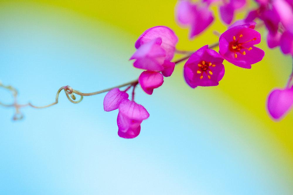 Flower, Abstract Art, Midwest, Color Photograph, Healing Art, Hospital Art, Interior Design, Wall Art