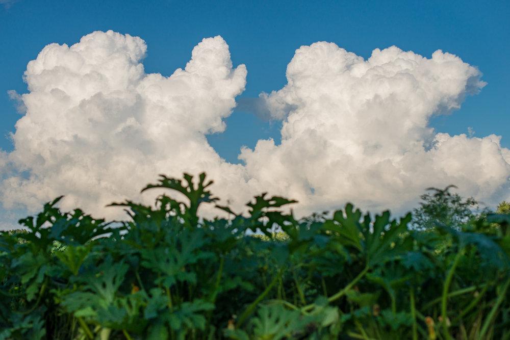 Clouds, Zucchini, Landscape, Midwest, Color Photograph, Healing Art, Hospital Art, Interior Design, Wall Art