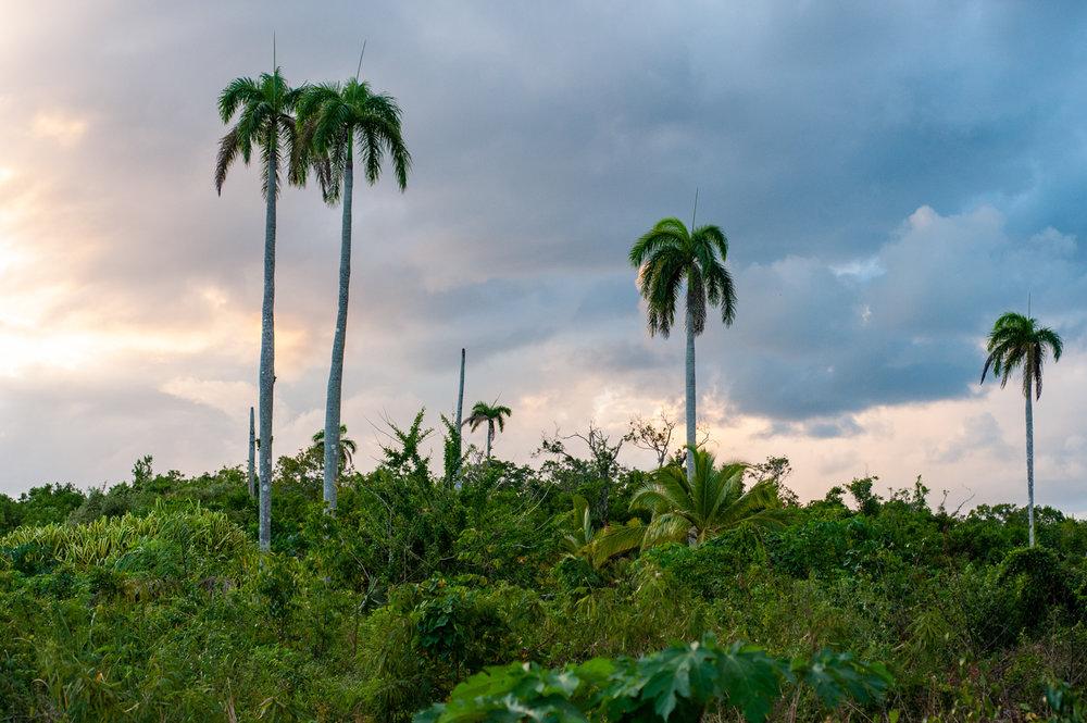 Landscape, Palm Trees, Cayman Islands, Grand Cayman, Color Photograph, Healing Art, Hospital Art, Interior Design, Wall Art