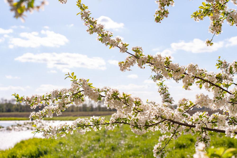 Landscape, Spring, Midwest, Color Photograph, Healing Art, Hospital Art, Interior Design, Wall Art