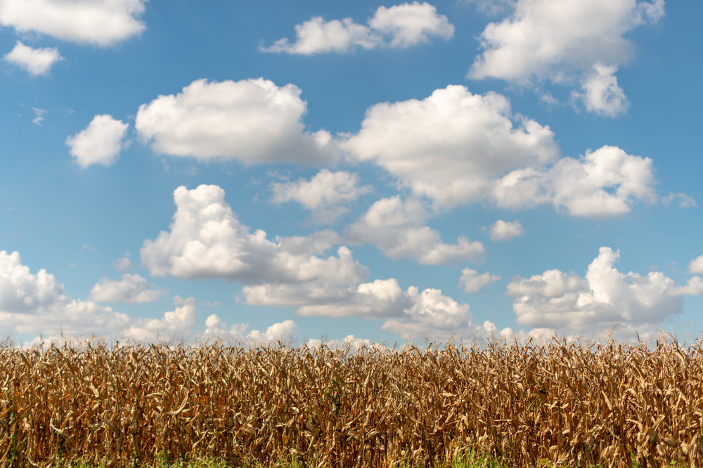 Color Photograph, Midwest, Summer, Corn, Clouds, Sky, Interior Design, Wall Art