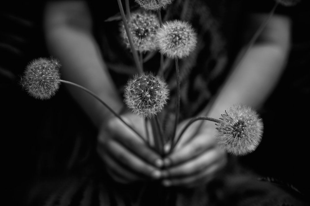 Black and White Photograph, Midwest, Dandelion, Flower, Interior Design, Wall Art