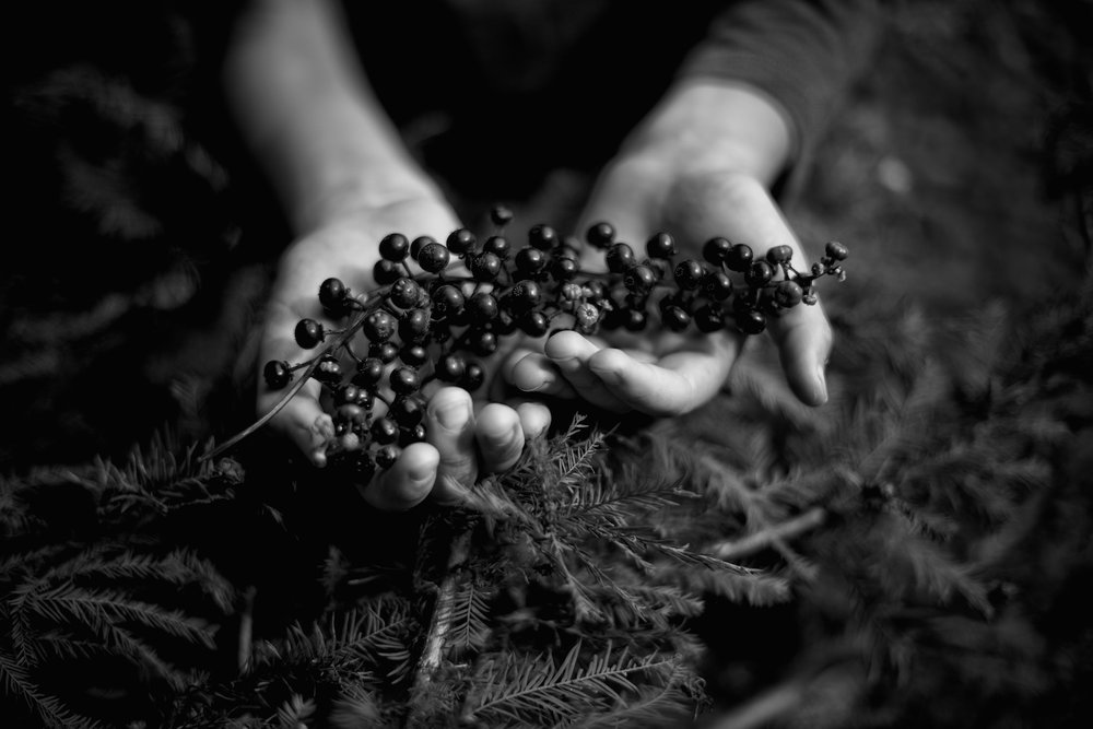 Black and White Photograph, Pokeberry, Midwest, Seeds, Hands, Interior Design, Wall Art