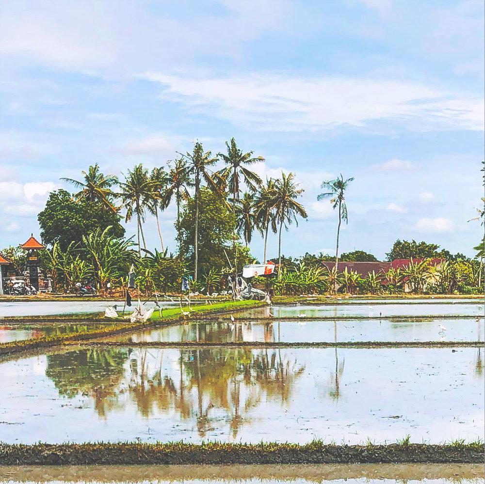 bali retreat for teachers beautiful paddy fields.jpg