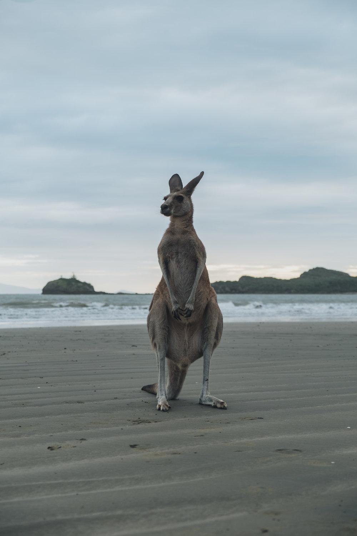 Australia-20180413-005972.jpg
