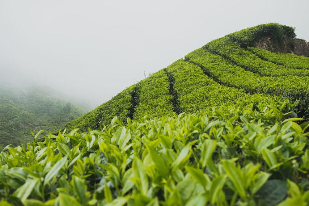 India-20180212-005136.jpg