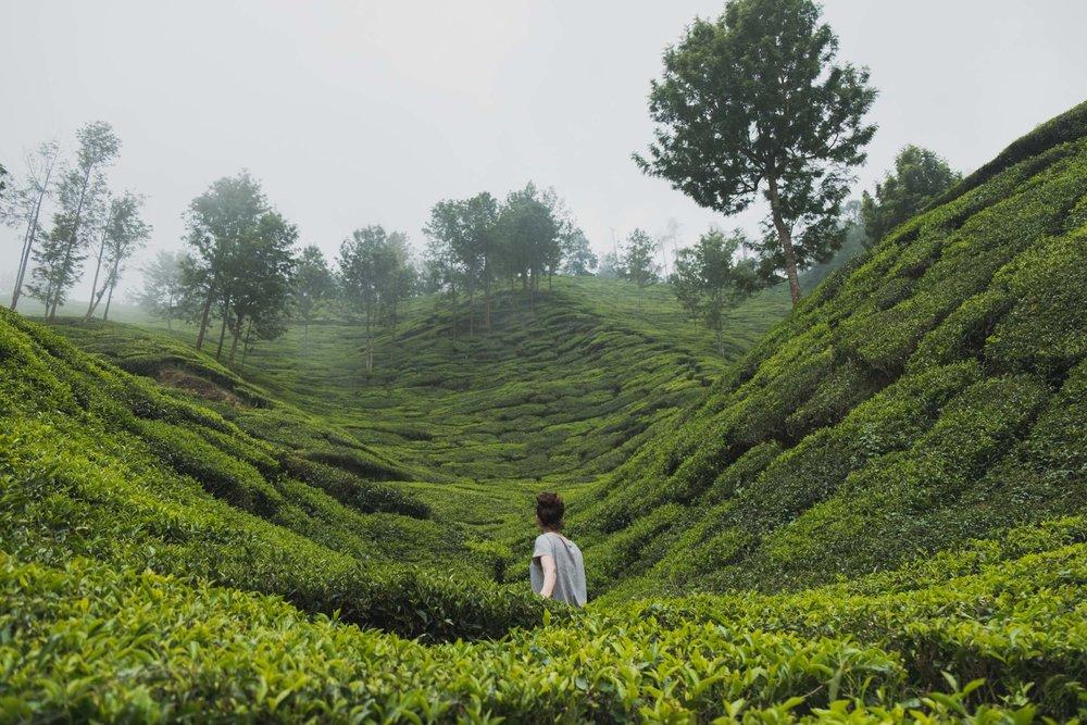 India-20180212-005168.jpg