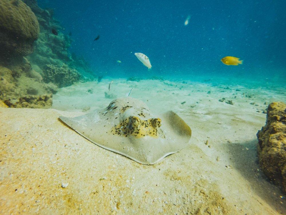 Great Barrier Reef, Australia -