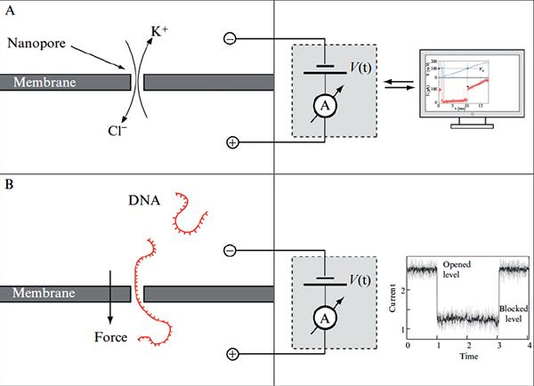 Methods in enzymology 2010 Dudko.png