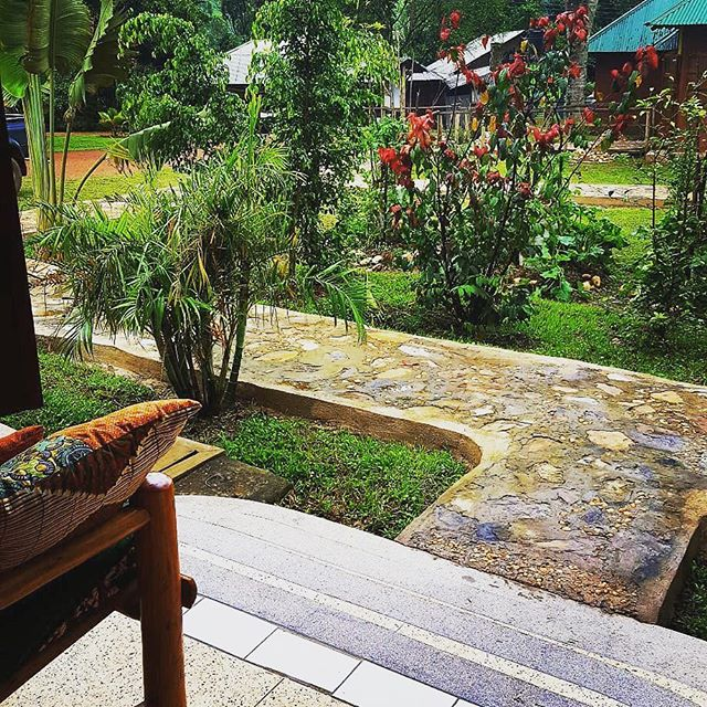 Lush view from the porch at Mwebesa House! Did you know you can stay with us if you are traveling to Bwindi?? 📸: @monkey_brain_musings