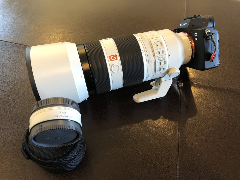 Sony A7III, 100-400 GM lens and 1.4X teleconverter