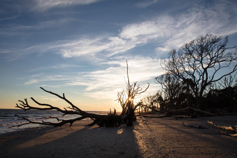 Sunset on the beach bone yard at Botany Bay Plantation