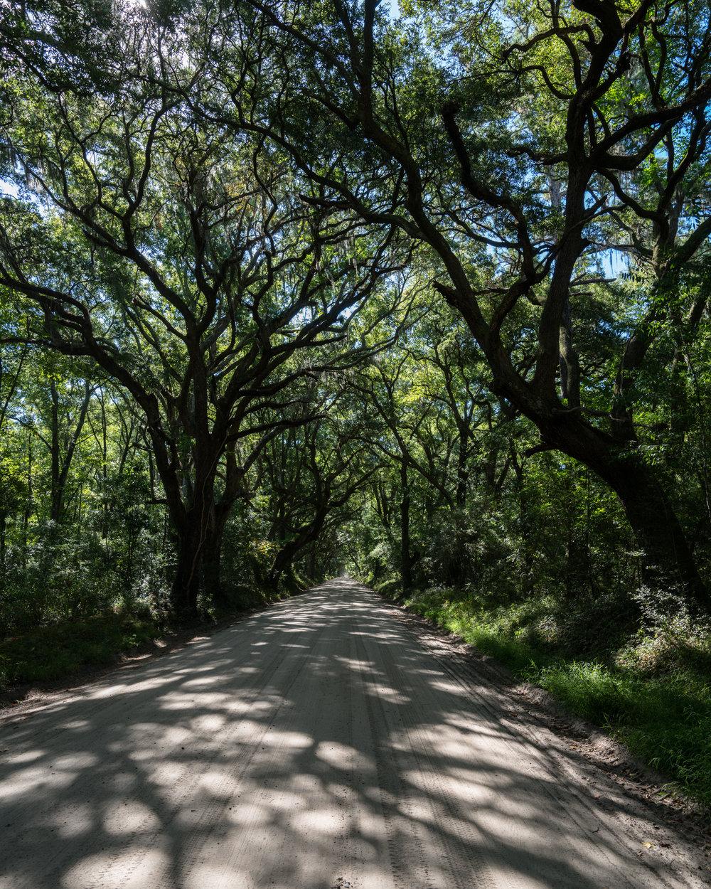 Live Oak canopy drive into Botany Bay Plantation.
