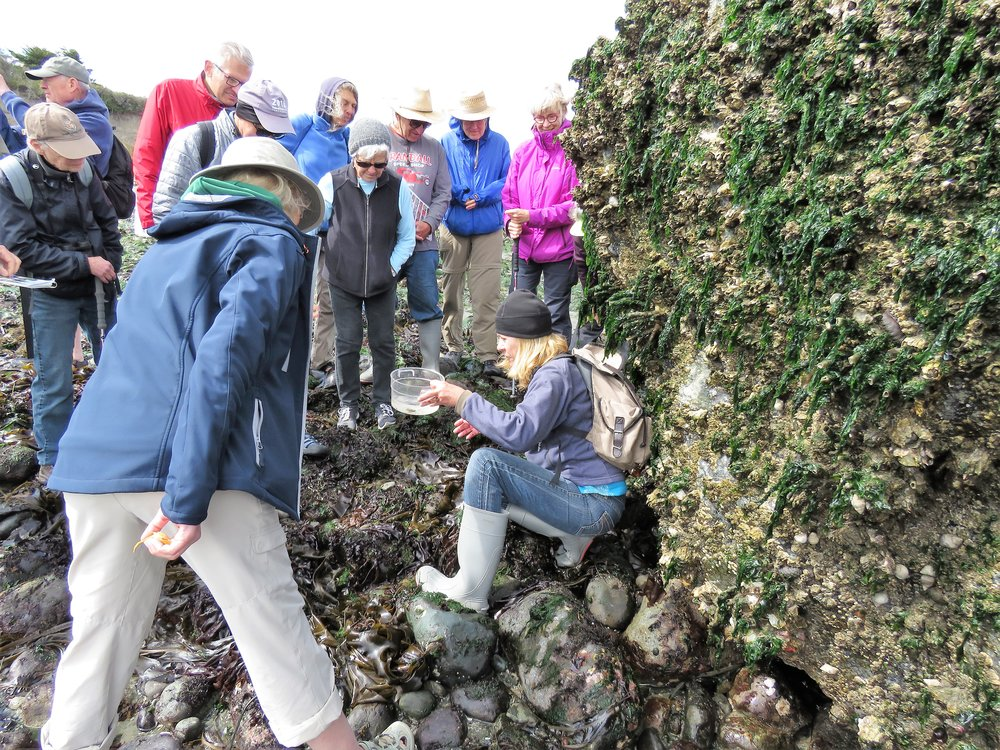 Wendy Feltham explains intertidal marine life to an interested group of nature enthusiasts
