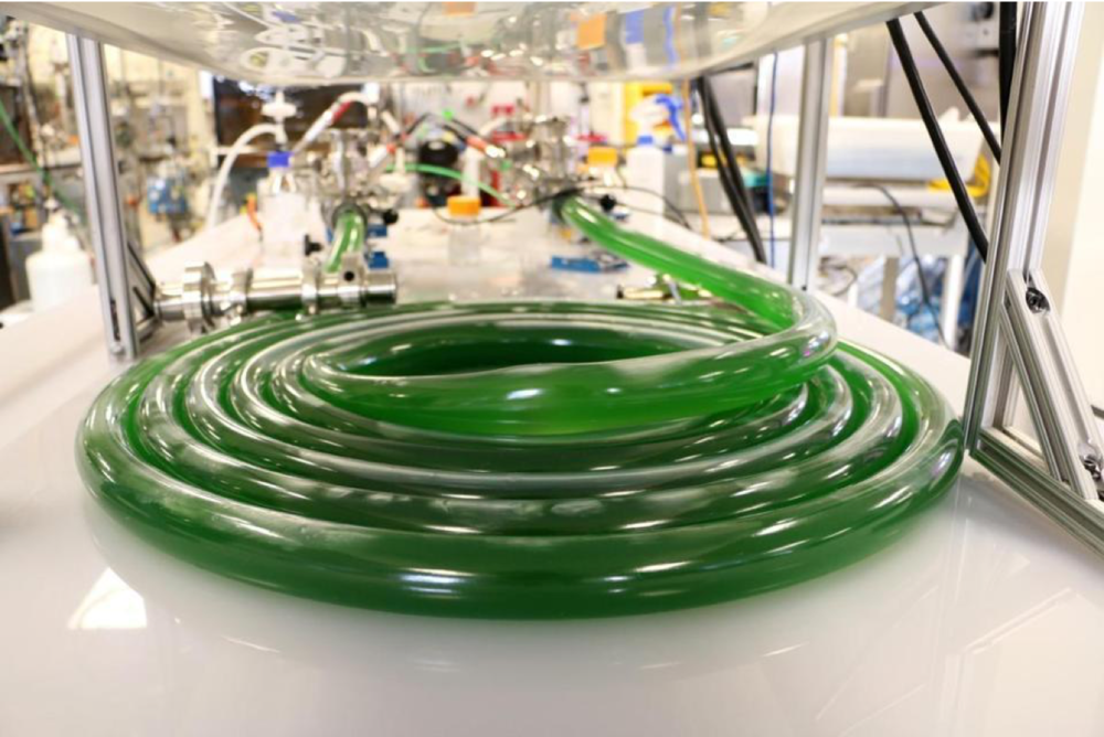 Joule's system produced diesel or petrol oil through photosynthesis of cyanobacteria. Courtesy of Joule Unlimited.