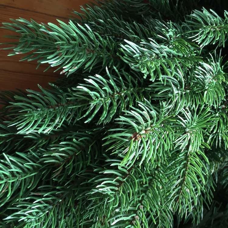 Christmas-Tree-Close-Up.jpg