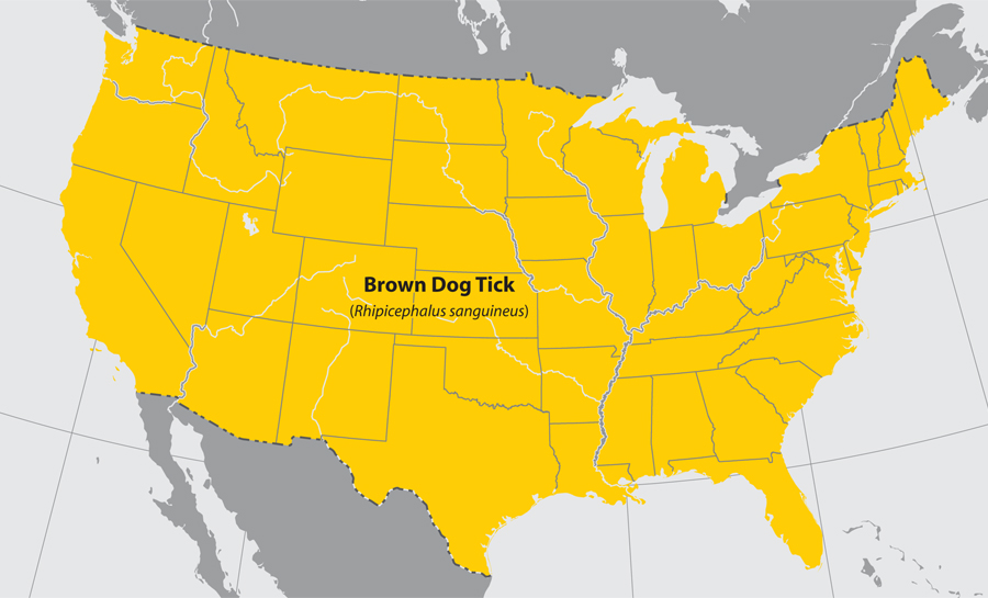 Brown dog tick distribution (CDC).