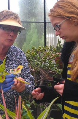 Greenhouse Curator Anne Pinc shows a teen how to propagate plants.