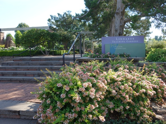 The Entry Garden welcomes visitors into the Linnaeus Teaching Garden.     All areas are accessible via ramps as well as steps.
