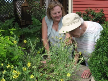 Next door, our Herb Garden appeals to all five senses. A visitor enjoys the heady scent of the Chocolate Flower.