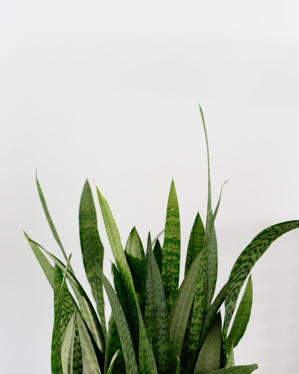los angeles interior designer casual comfortable snake plant
