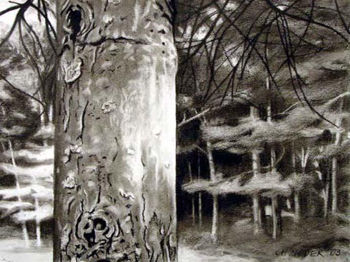 GLINT, 2003, charcoal on paper, 24 x 18