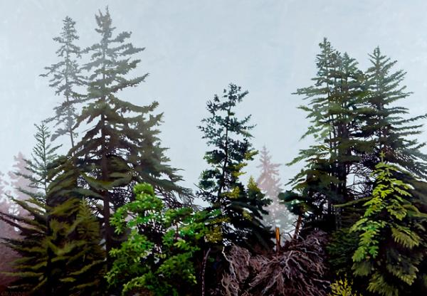 "Charles Yoder's ""Mystified"" captures the stillness and muted light of a forest on a gray day."