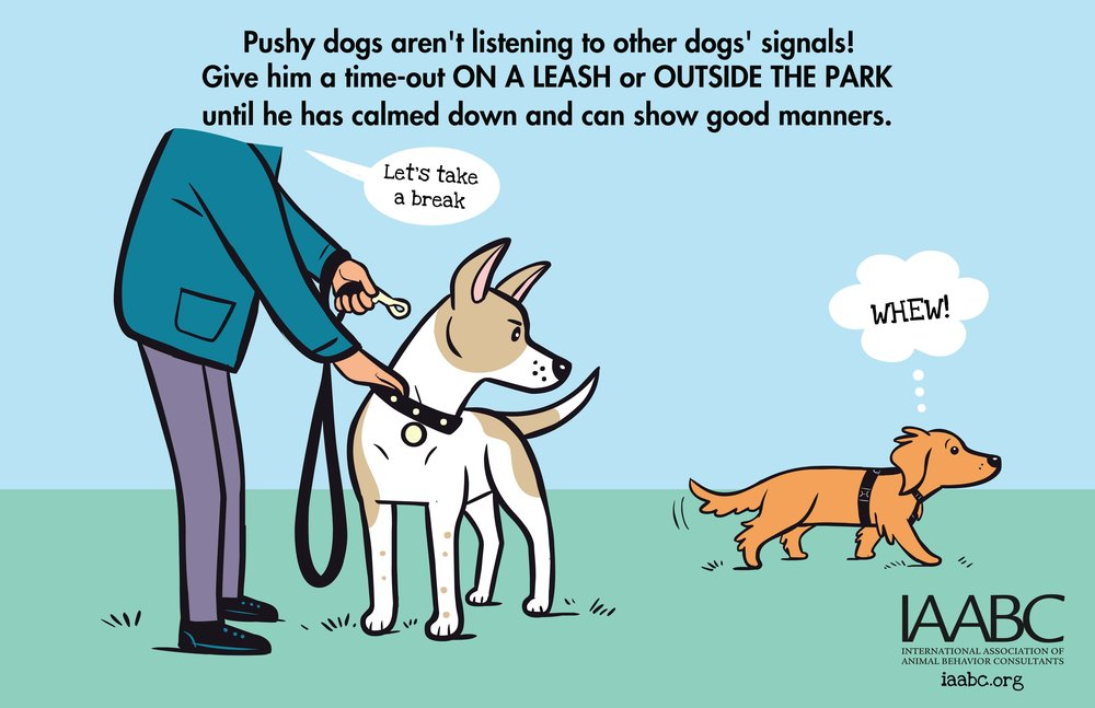 Pushy+Dog+2.jpg