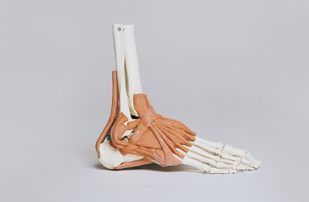 foot anatomy biomechanical assessment london podiatry.jpg