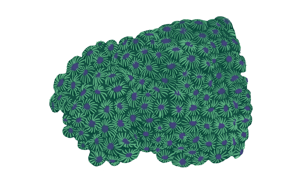 Honeycomb coralDiploastraea sp.png