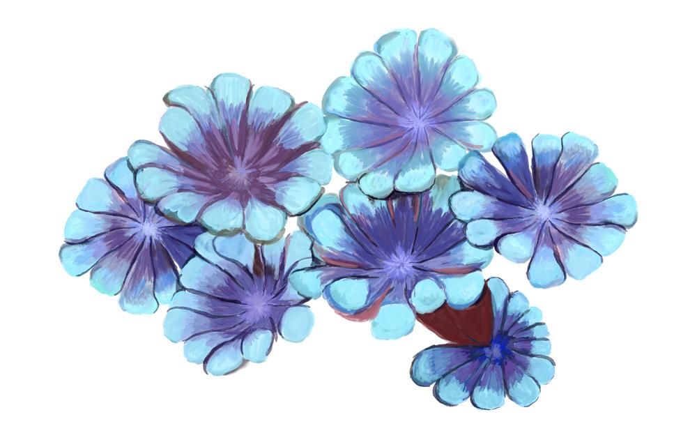 Flowerpot coralAlveopora sp.png