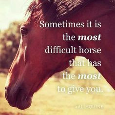 Learning new skills and tools to support daily challenges - horses are great mirrors to and for our own emotions, fears and anxieties.