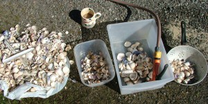 Sorting out the shells