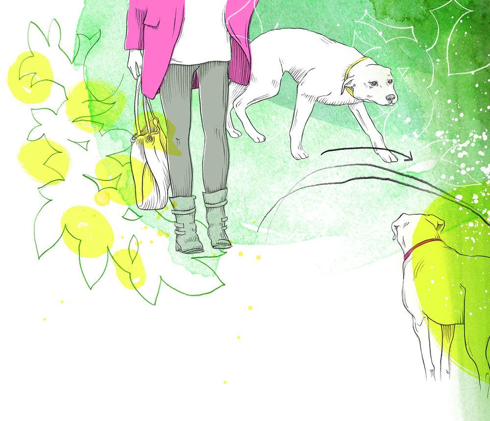 Dogs Magazin: Strecke Hundeerziehung