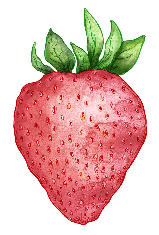 Dörrwerk: Fruchtpapier Erdbeere