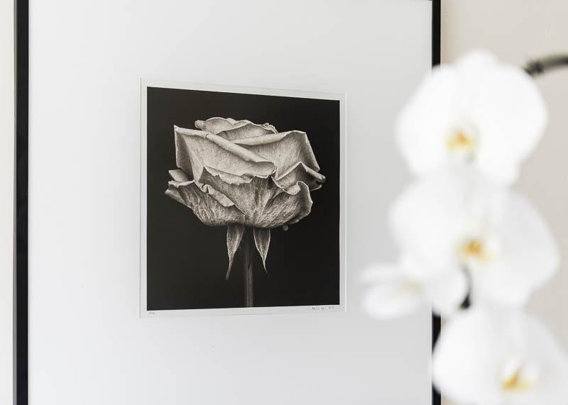 _8104758_Pink Rose III platinum print (David Chow)-1_© Paul J Coghlin_Instagram.jpg